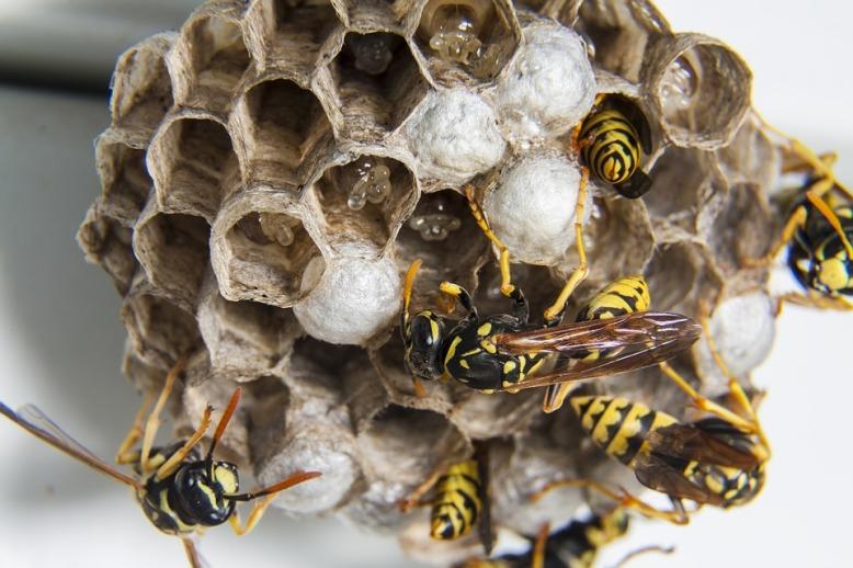 swarm-1903243_960_720.jpg
